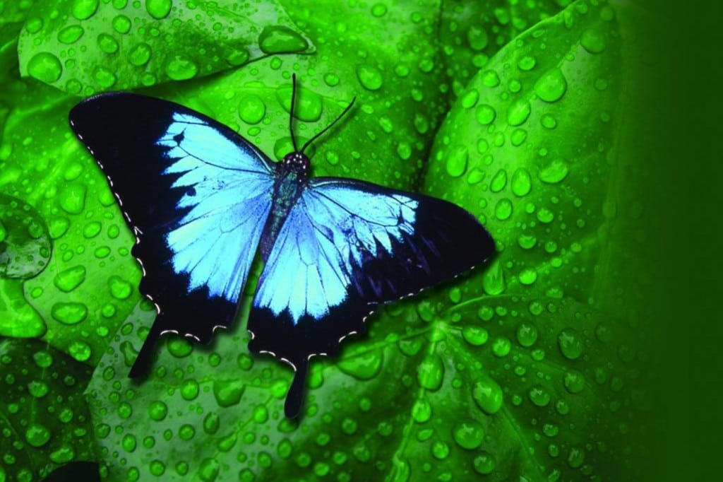 blue butterfly and leaf